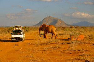 afrikanskoe-safari2