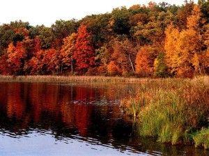 autumn-forest-16272