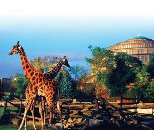 зоопарк вроцлава