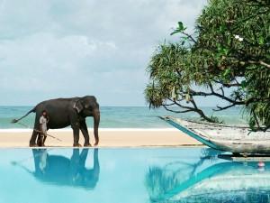 Шри-Ланка – остров дружелюбия