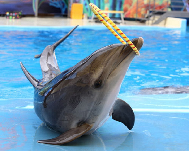 Дельфинарий «Немо»